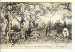 24 La Dordogne Pittoresque - La Recolte Des Chataignes - Frankreich