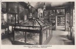 1920 CIRCA DOMODOSSOLA COLLEGIO ROSMINI MUSEO DI SCIENZE NATURALE - Non Classificati
