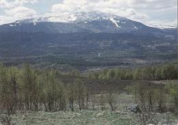 Schiehallion From Tummel Forest, Scotland - Phil Banks H377, Posted 2007 - Perthshire