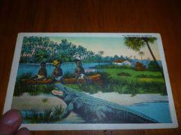 BC6-3-25 LC94 Alligator Bait Florida - Etats-Unis