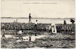 Ile D'Oléron - La Péroche - A La Recherche Des Palourdes - Ile D'Oléron