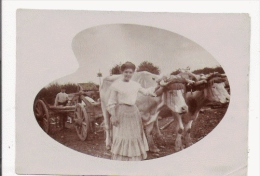 PETITE PHOTO ANCIENNE ATTELAGE DE BOEUFS - Métiers