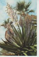 (FLOR167) FLOWER. FLWURS. YUCA ALEOFILIACEA - Flowers, Plants & Trees