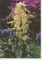 (FLOR246) FLOWER. FLEURS. FLORES - Sin Clasificación
