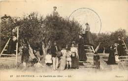 Ref C383- En Provence - La Cueillette Des Olives - Theme Huile D Olive - Oliviers  -  Carte Bon Etat - - Cultures