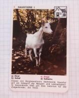 Goat Chèvre Ziege / NIVEA Cream Crème / Playing Card - Tierbabies, Animals Baby Bébé - Kartenspiele (traditionell)