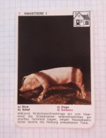 Pig Piggy, Cochon Schwein / NIVEA Cream Crème / Playing Card - Tierbabies, Animals Baby Bébé - Kartenspiele (traditionell)