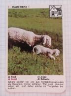 Lamb Agneau Lamm SCHAF SHEEP MOUTON / NIVEA Cream Crème / Playing Card - Tierbabies, Animals Baby Bébé - Kartenspiele (traditionell)