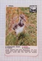 Lapwing Peewit Kiebitz Vanneau / NIVEA Cream Crème / Playing Card - Tierbabies Animals Baby, Duck - Kartenspiele (traditionell)