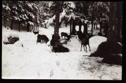 A2926) Ansichtskarte Rehe Und Hirsche Von Österreich 1923 - Altri