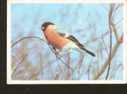 1/2 Russia Moscow 1990 Russian NATURE Fauna Bird REDBREAST  Photo By I. Konstantinova - Calendarios