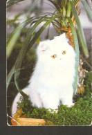 Latvia Riga USSR Stils 1991 Fauna Animal White Cat Kitten Pusy-cat - Calendari