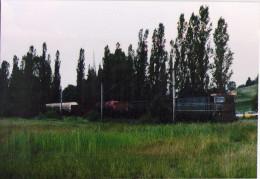 Roumanie - CFR - Train De Marchandises Entre Malnas Et Bodoc - 1995 - Trains