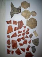 Lot  : Gaulois , Gallo-romain , Sigilés Coquillages Céramiques ( Ancienne Collection  Ramassé Dans Les Vignes Hérault ) - Archeologie