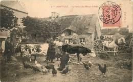DONVILLE LA FERME DES BLANCS ARBRES - France