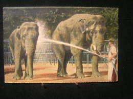 Eb-n°96 /  L´ Élephant -  Le Plus Puissant Des Animaux Terrestres,originaire De L'Afrique Et De L'Asie - - Éléphants