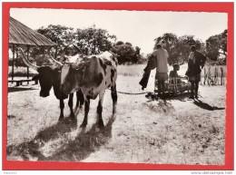 H485 ZAMBEZE UNE AMBULANCE RUSTIQUE - Zambie