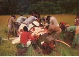 Gabon.. Animée.. Scène De Dépeçage D'un éléphant - Gabon