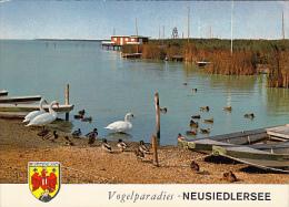 6458- POSTCARD, NEUSIEDL LAKE, BIRDS PARADISE, SWANS, DUCKS, BOATS - Autriche