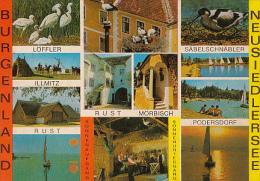 6459- POSTCARD, NEUSIEDL LAKE, BIRDS PARADISE, SPOONBILL, STORK, PIED AVOSET, HOUSES, SAILING BOATS - Autriche