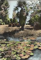 Frankreich Foto AK 31 Muret / H-G 1963  Jardins Des Combattants , Ruisseau Des Nénuphars - Fleurs, Plantes & Arbres