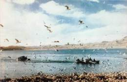 BF36424 Vues Du Tibet L Ile Aux Oiseaux   Front/back Scan - Tibet