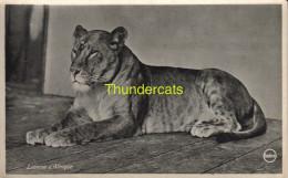 CPA LIONNE D'AFRIQUE AFRICAN LION - Lions