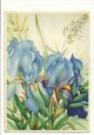 Reproduction De A. Kretschmer A. Iris - Fleurs, Plantes & Arbres