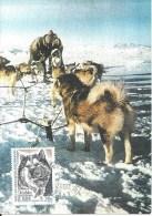 (L270) TAAF 2000 Hobbs Chien De Traîneu Sur Carte Premier Jour N° Yvert 265 - FDC