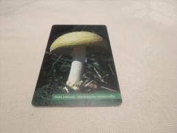 SLOVAKIA - Nice Phonecard Mushroom - Slovaquie