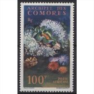 Komoren 1962 Riesenmuschel 50 Postfrisch - Komoren (1975-...)