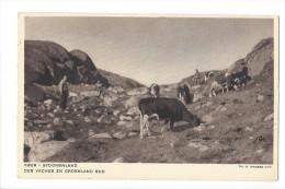 LVA1783 -  Des Vaches En Groenland Sud Koer I Groenland Sud - Greenland