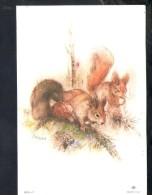 J394 Salbert (Illustrator Of Barbie ) Illustrazione, Illustration - Scoiattoli _ Squirrels _ écureuils - Illustrators & Photographers
