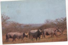 """FRANCE -  """"Rhinocéros -Parc National De Pretória"""". - Rhinocéros"""