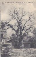 Le Gros Chêne De Liernu (animée) - Eghezée