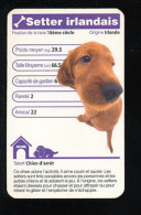 Humour Race De Chien / Dog /  Setter Irlandais   / IM126/42 - Vieux Papiers