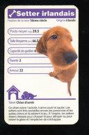 Humour Race De Chien / Dog /  Setter Irlandais   / IM126/42 - Non Classificati