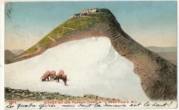 2194 Schwein Auf Dem Faulhorn Paturage Cochons  Timbre Interlaken 1907 - BE Bern