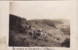 CP Photo 14-18 Albanie - Les Moyens De Transport, Soldats Français Avec Des Mulets, âne (A86, Ww1, Wk1) - Albanien