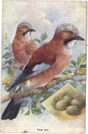 The Jay - London County Council Reward Card - Colour Card By Tucks - Altri
