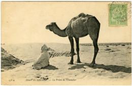 Désert Du SAHARA. - La Prière Du Chamelier - Sahara Occidental