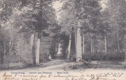 Kortenberg - Dréve Des Princes - Kortenberg