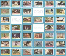 COLECÇÃO COMPLETA ( 39 Postcards ) - Crias Do Jardim Zoológico - Lisbon ZOO Lisboa - Portugal - Other
