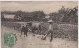 R :  Viêt  Nam :  Le  Labourage   Annamite - Viêt-Nam