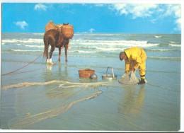 Fisherman Of Shrimps, Garnaal Vissers, Used Postcard [14068] - Fishing