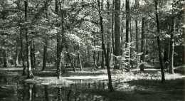 Paysage De Sous-bois - Luoghi
