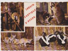 ASSON-Jardin Exotique -Multivues-Lémuriens De Madagascar,ratons Laveurs,fennec,shunks(mouflettes) - Andere Gemeenten