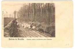 Environs de Bruxelles   --  Chemin creux � la Morette pr�s d' Assche