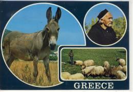 GREECE - Typical Scenes, Typische Szenen, Esel, Schafe, Donkey, Cul, Schäfer, Type, Shepherd - Europe