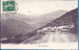 --  EN CEVENNES --  BERGER ET SON TROUPEAU -- 1916 - Languedoc-Roussillon